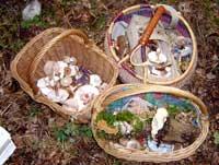3 Körbe mit Pilzen