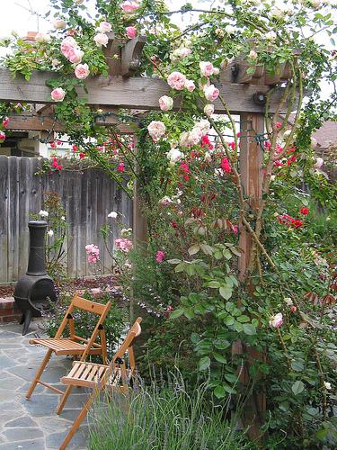 Fassadenbegrünung « Sportplatzdschungel Pergola Bepflanzen Kletterpflanzen