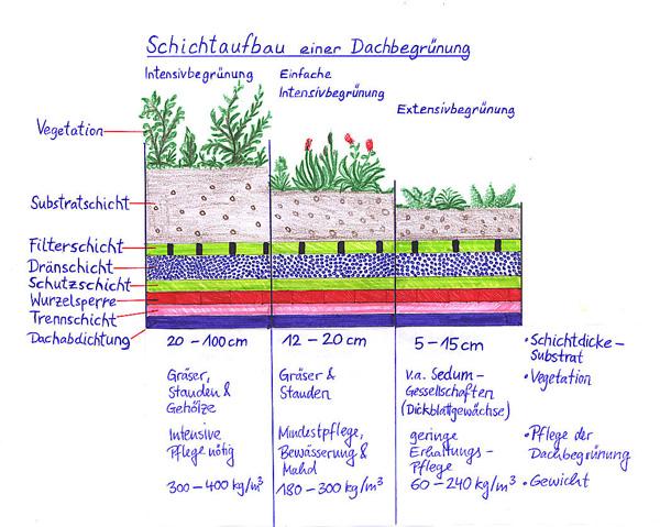 dachbegrünung - grÜne liga berlin e.v. netzwerk Ökologischer,