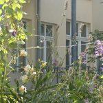 Balkon mit Rankpflanzen