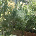 bepflanzte Balkonkästen