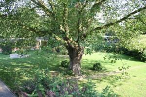 Baum im Schulgarten