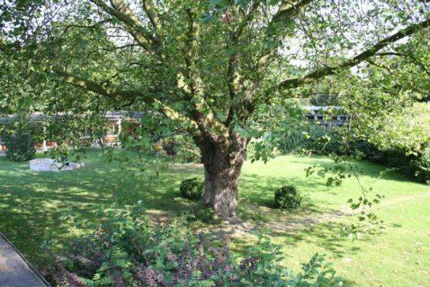 Erwachsener Baum