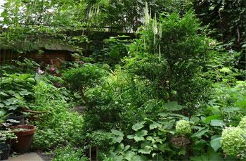 Schattenpflanzen auf dem dunklen Hinterhof