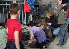 Kinder pflanzen
