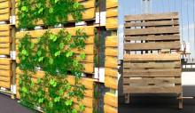 Fassadenbegrünung_www.gruene-Stadt-Planung.de