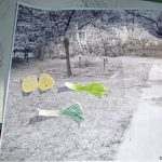 Bildung für nachhaltige Entwicklung in Schulgärten und auf grünen Schulhöfen – Workshop zur Gestaltung von Holzgemüse © GRÜNE LIGA Berlin