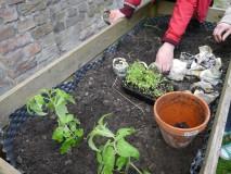 Bepflanzung_Hochbeet