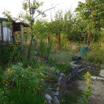 Einblick in ein Naturgarten