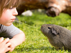 Tierliebe, Kind mit Meerschwein