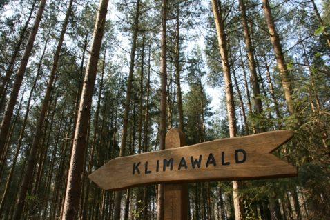 Klimawald Usedom-Koserow, Quelle: TMV