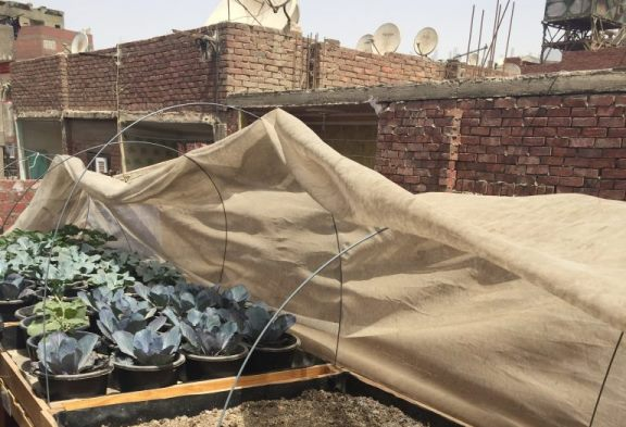 Urban Agriculture in Cairo's Informal Settlements