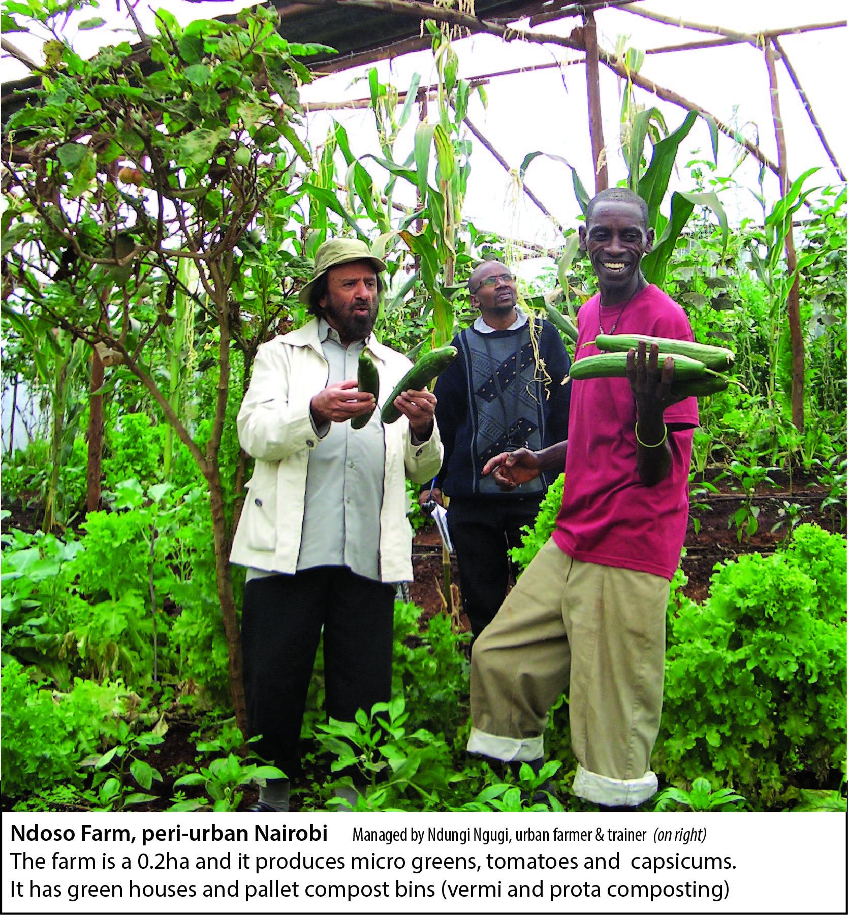 Mazingira Institute Nairobi