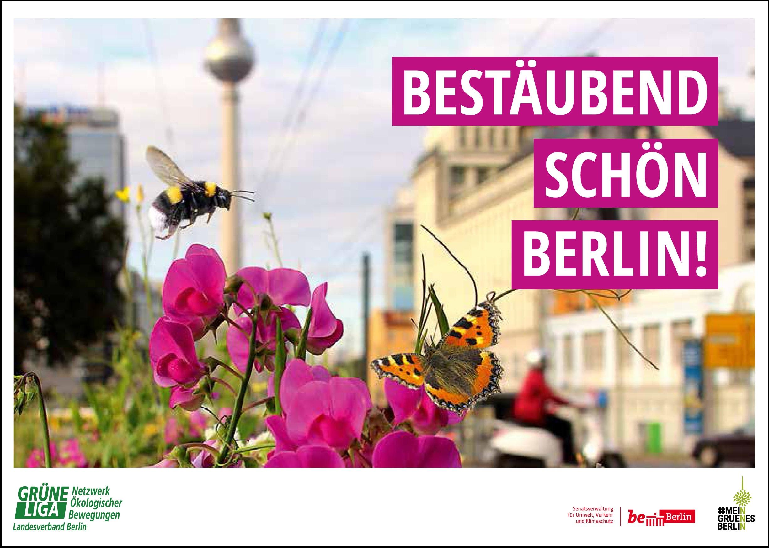 Bestäubend schön Berlin - Begrünen für Wildbienen und Co.